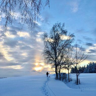 Spaziergang mit Schlitten - Sven Sarnes