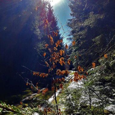 Bisschen Herbst-Winter - Michael Herbert