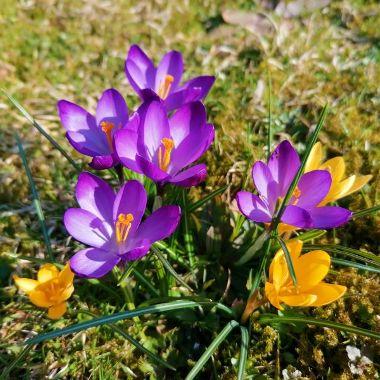 Frühling in der Bachstraße - Elisabeth Kulzer