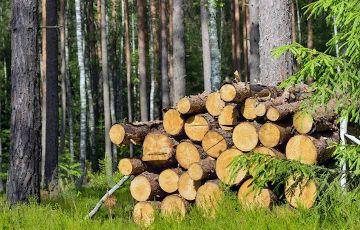 Selbstwerber zur Aufarbeitung einer kleineren Menge Brennholz im Gemeindewald Rettenbach gesucht