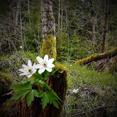 Der Frühling ist da - Michael Herbert